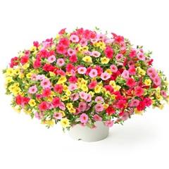 母の日にプレゼントする花
